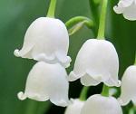 chypre floral a